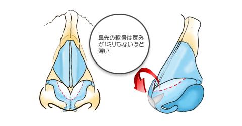 鼻先の軟骨は厚みが1ミリもないほど薄い