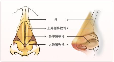 鼻の構造(解剖)