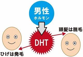 男性ホルモンとジヒドロテストステロン(DHT)