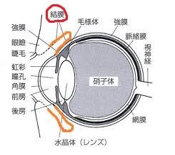 目の解剖図