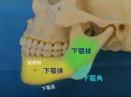 下顎角の形態について