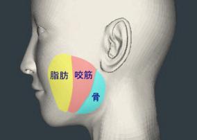 小顔の適応
