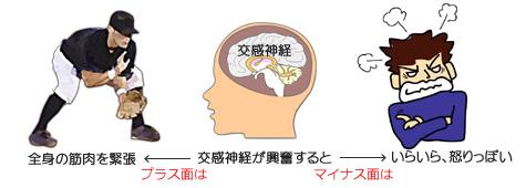 ミュラー筋と交感神経